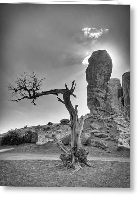 The Old Tree Greeting Card by Andreas Freund