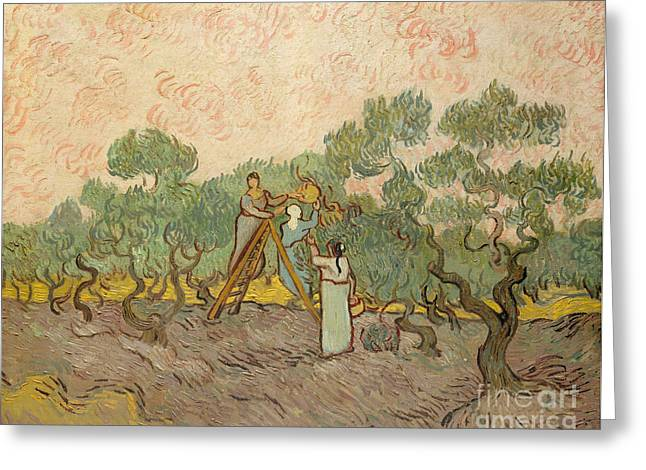The Olive Pickers, Saint-remy, 1889 Greeting Card by Vincent Van Gogh