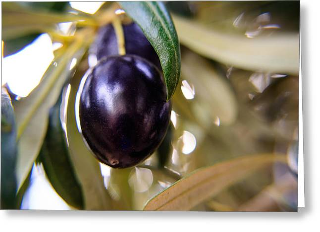 The Olive Greeting Card by Tikvah's Hope