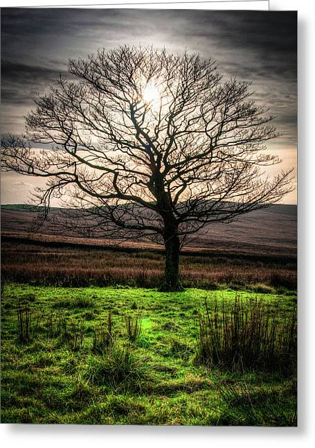 Greeting Card featuring the photograph The One Tree by Geoff Smith