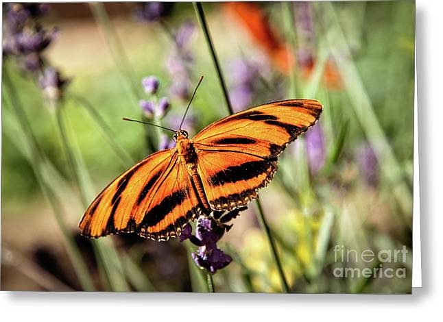 The Orange Heliconian Butterfly Greeting Card