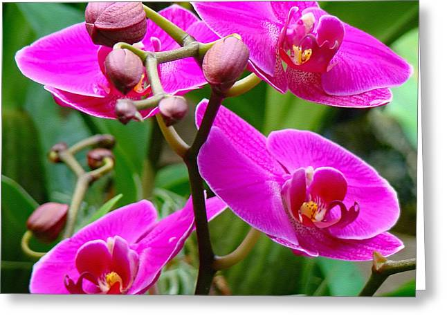 Greeting Card featuring the photograph The Orchid Dance by Sue Melvin