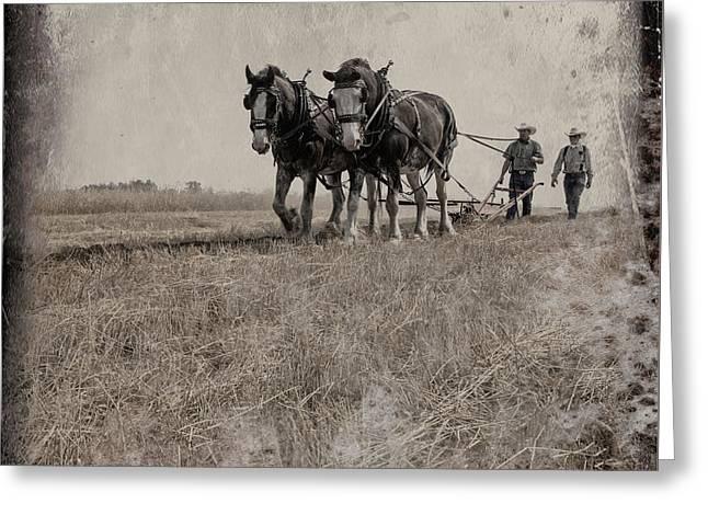 The Original Horsepower Greeting Card