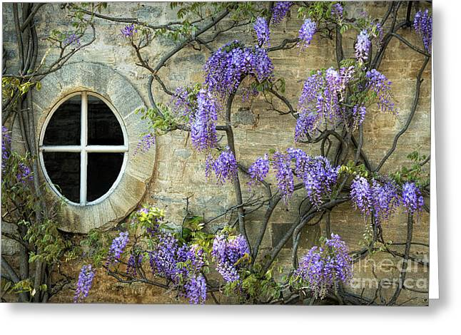 The Oval Window Greeting Card by Tim Gainey
