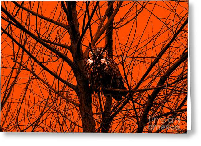 The Owl . Orange Greeting Card by Wingsdomain Art and Photography