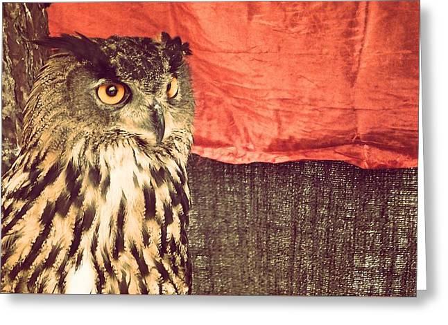 The Owl Greeting Card by Pedro Venancio