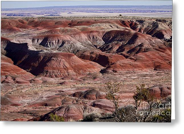 The Painted Desert  8062 Greeting Card by James BO  Insogna