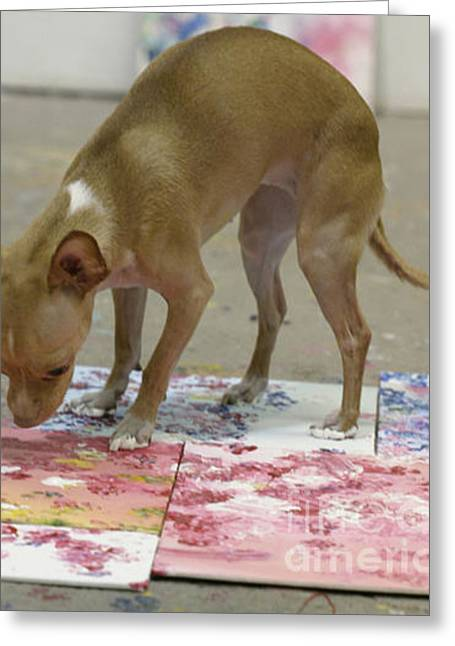 The Painting Chihuahua Greeting Card