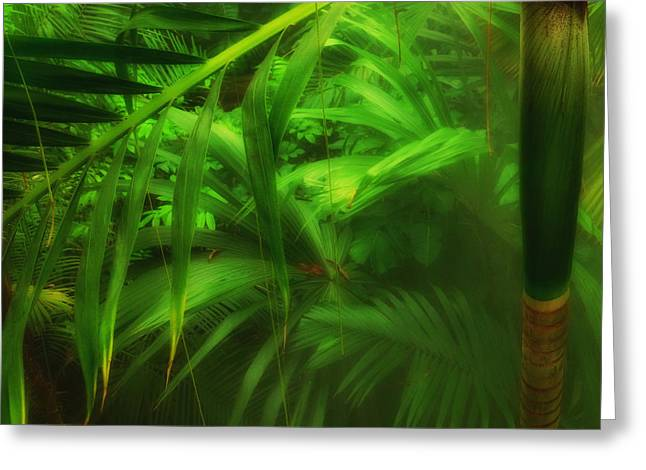 Greeting Card featuring the photograph The Palm Forest  by Connie Handscomb