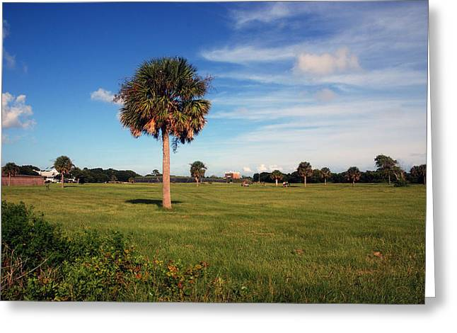 The Palmetto Tree Greeting Card by Susanne Van Hulst