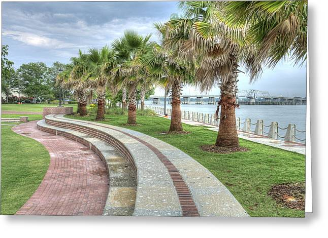 The Palms Of Water Front Park Greeting Card