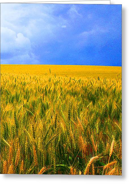 The Palouse Wheat Fields Greeting Card