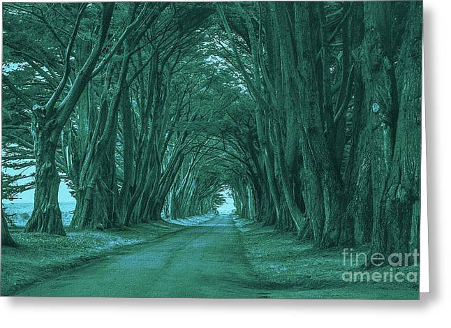 The Path Before Me Greeting Card