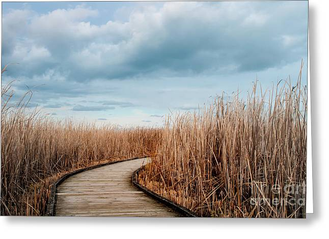 The Path Greeting Card by Janal Koenig