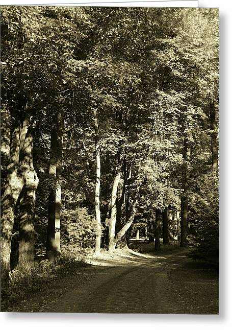 Greeting Card featuring the photograph The Path Less Traveled by John Schneider