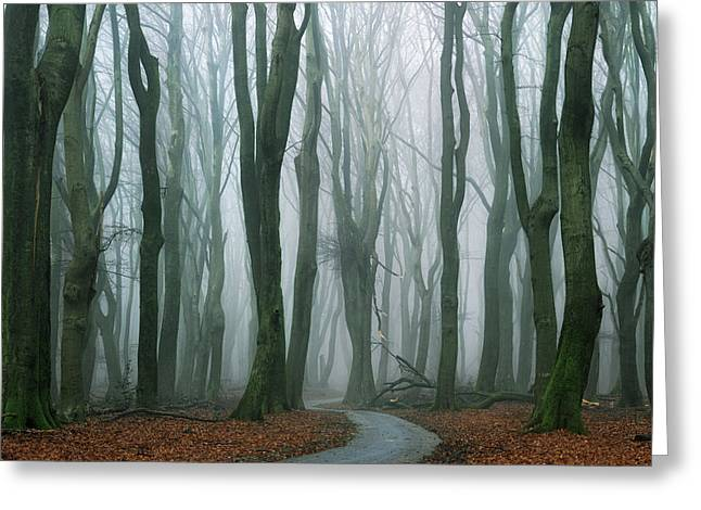 The Path Greeting Card by Martin Podt