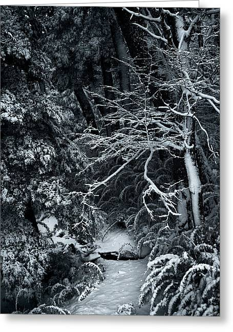 The Path To The Frozen Forest In The Argentine Patagonia Greeting Card