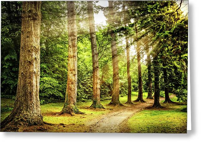 The Path Under Sunrays Greeting Card