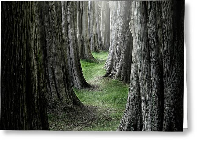 The Pathway Greeting Card by Ian David Soar