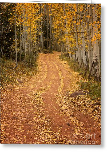 The Pathway To Fall Greeting Card by Ronda Kimbrow