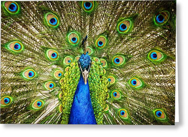 The Peacock Greeting Card by Janis Knight