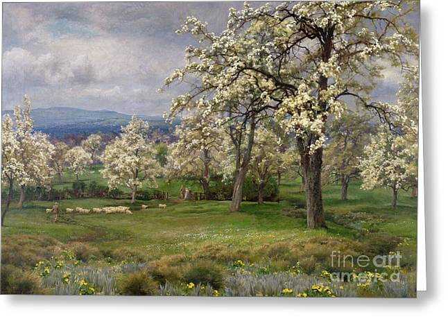 The Pear Orchard Greeting Card by Alfred Parsons