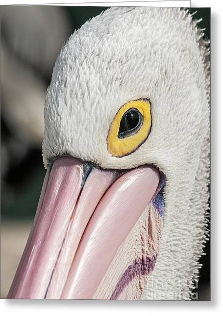 The Pelican Look Greeting Card by Werner Padarin