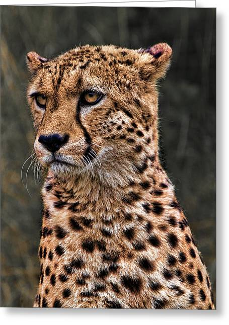 The Pensive Cheetah Greeting Card by Chris Lord