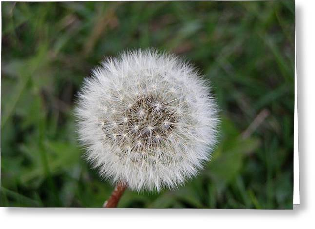Greeting Card featuring the photograph The Perfect Dandelion by DeeLon Merritt