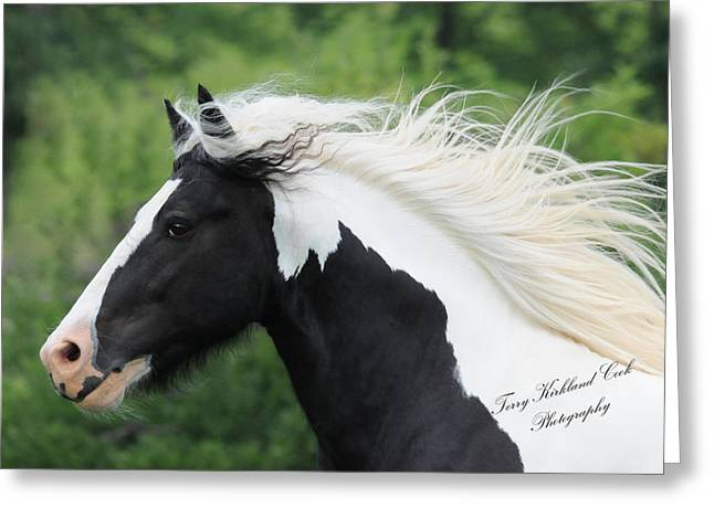 The Perfect Stallion  Greeting Card by Terry Kirkland Cook