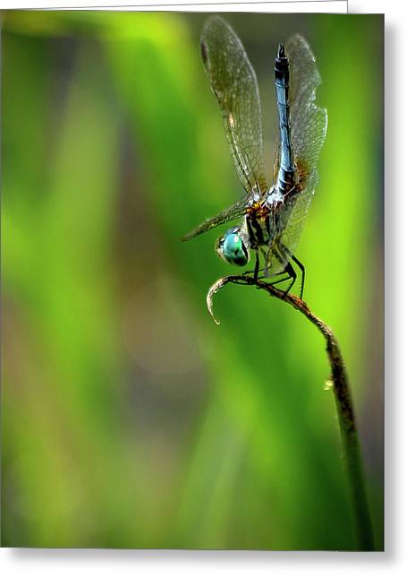 Greeting Card featuring the photograph The Performer Dragonfly Art by Reid Callaway