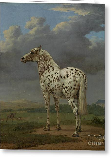 The Piebald Horse By Paulus Potter  Greeting Card