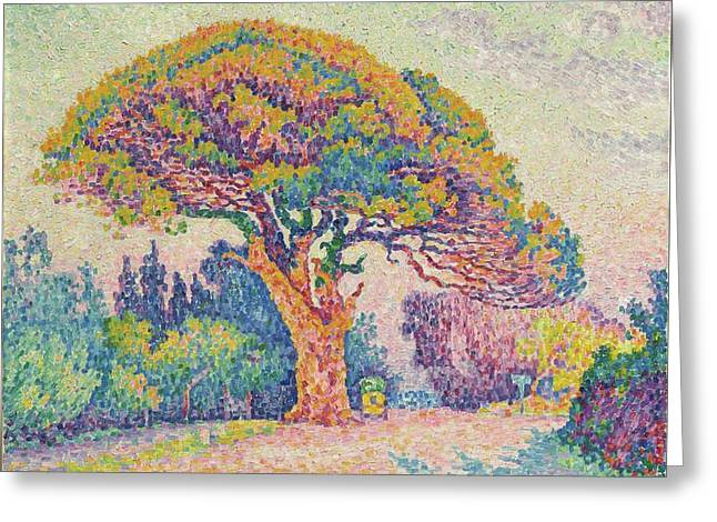 The Pine Tree At Saint Tropez Greeting Card by MotionAge Designs