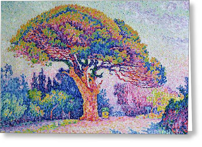 The Pine Tree At Saint Tropez Greeting Card