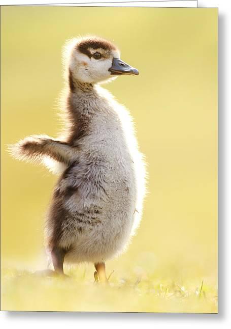The Pinguin Simulator Greeting Card