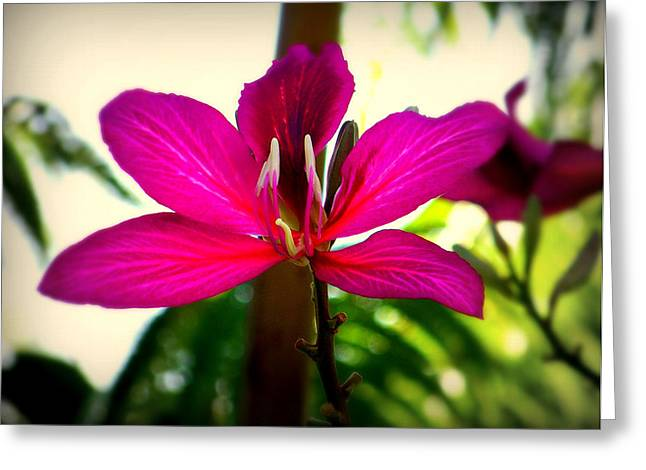 The Pink Lady Greeting Card by Karen Wiles