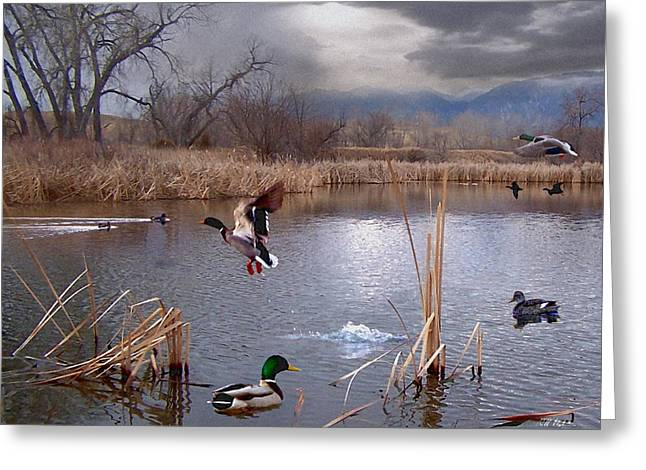 The Pond Greeting Card by Bill Stephens