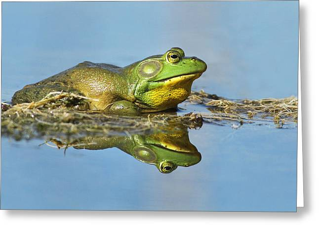 The Pond King Greeting Card by Mircea Costina Photography