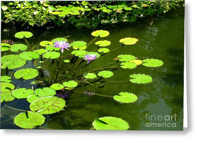 Greeting Card featuring the photograph The Pond by Robert D McBain
