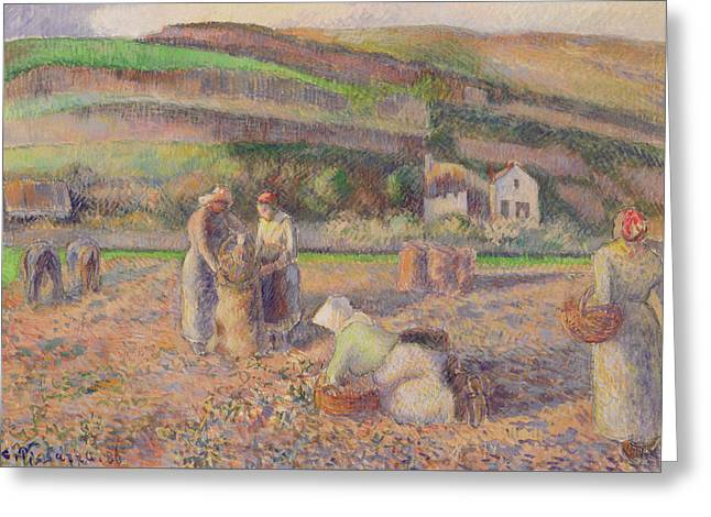 The Potato Harvest Greeting Card by Camille Pissarro