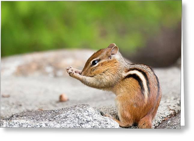 The Praying Chipmunk Greeting Card