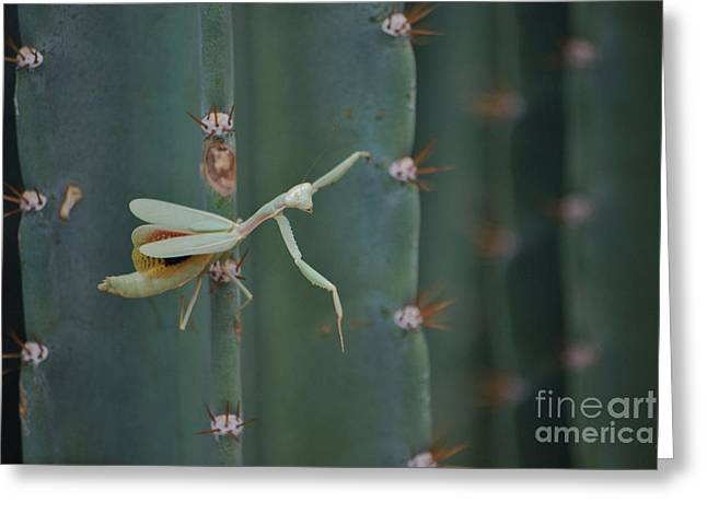 Greeting Card featuring the photograph The Praying Mantis by Donna Greene