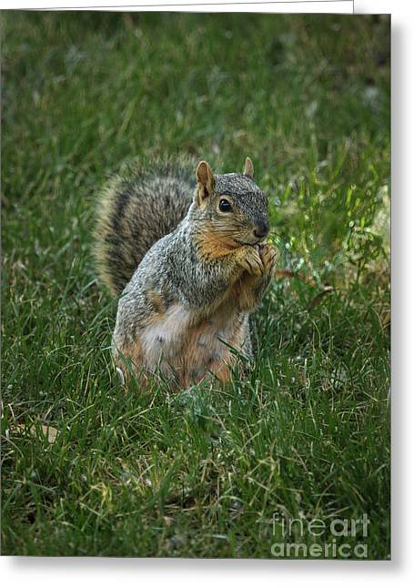 The Praying Squirrel Greeting Card by Robert Bales