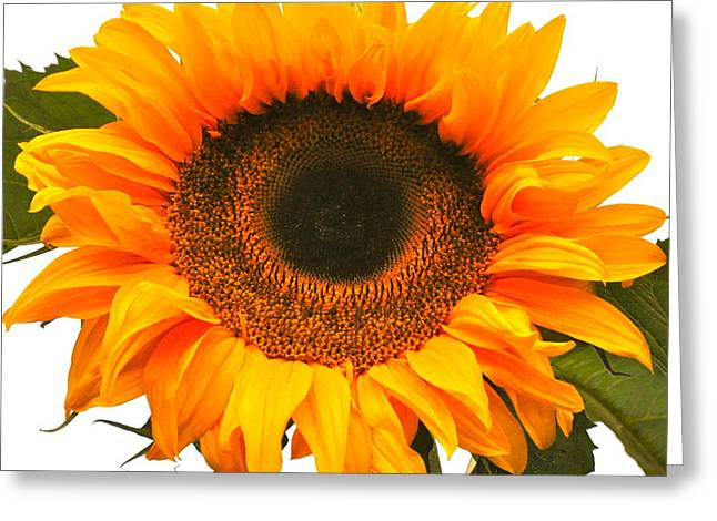 The Prettiest Sunflower Greeting Card