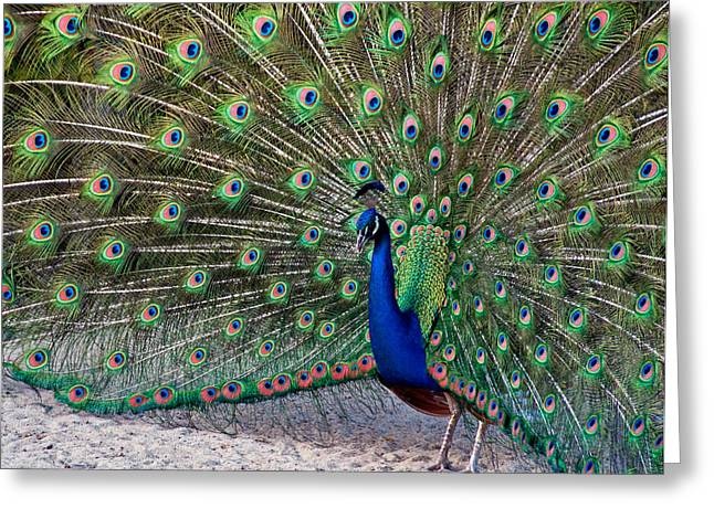 Greeting Card featuring the photograph The Proud Peacock by Thanh Thuy Nguyen