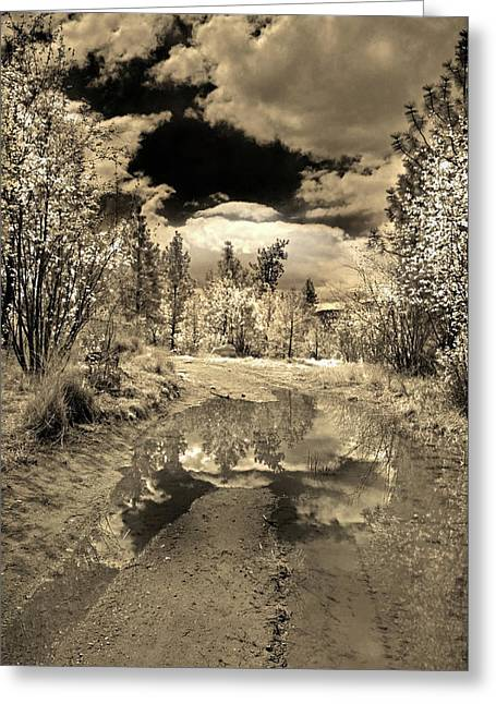 The Puddle Greeting Card by Tara Turner