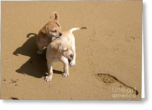 The Puppies Greeting Card by Madeline Ellis