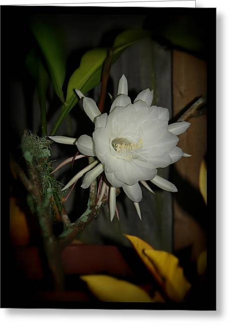 The Queen Of The Night Greeting Card by Mandy Shupp
