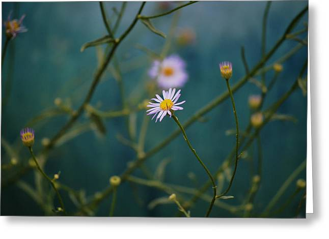 Greeting Card featuring the photograph The Quiet Aster by Douglas MooreZart