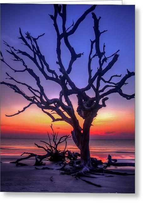The Quiet Driftwood Beach Live Oaks Jekyll Island Georgia Greeting Card by Reid Callaway